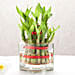 Two layer bamboo plant with a square glass vase