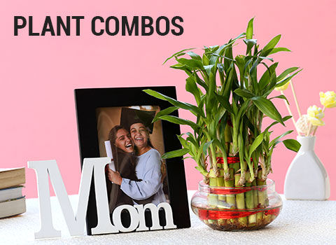 plant-combos
