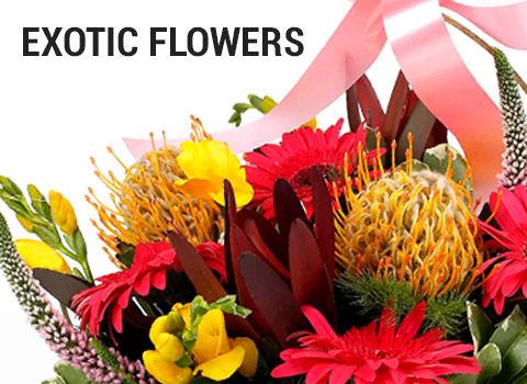 exotic-flowers-mob-17-feb-2019.jpg
