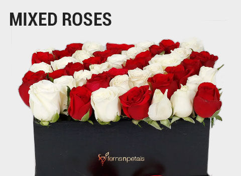 Mixed-Roses-mob-17-feb-2019.jpg