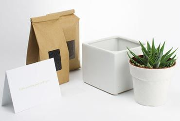 DIY Plants Kit