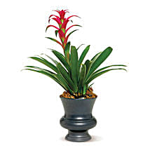 Blooming Bromeliad: Mothers Day Flowers to Canada