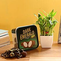2 Layer Bamboo & Amul Emerald Chocolate: Good Luck Plants for Boss Day