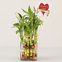 2 Layer Bamboo Plant For Best Wife: Indoor Plants