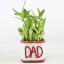 2 Layer Lucky Bamboo Plant For Dad: Bamboo Plants