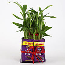 2 Layer Lucky Bamboo With Dairy Milk Chocolates: Order Plants n Chocolates