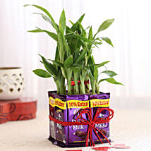 2 Layer Lucky Bamboo With Dairy Milk Chocolates: Send Plants to Pune