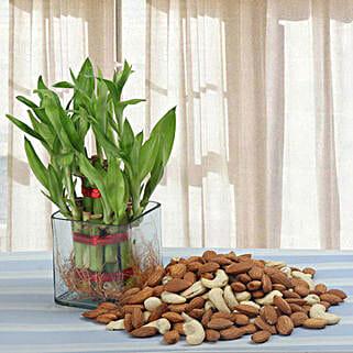 Alluring Gift: Good Luck Plants