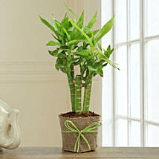 Bamboo Plant Decor: