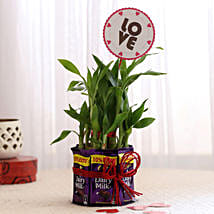 Bamboo with Love Tag & Dairy Milk Combo: Plants to Delhi