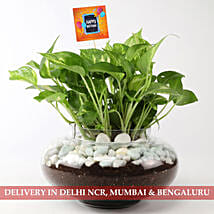 Beautiful Scindapsus Plant For Birthday: Send Plants to Bangalore