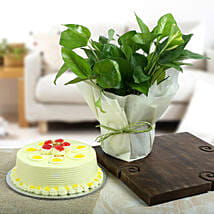 Butterscotch Cake N Lucky Money Plant: Money Tree