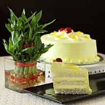 Butterscotch Cake With Bamboo Plant: Plants for anniversary
