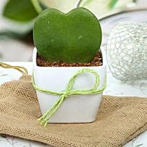 Cute Love Plant: Gift Ideas