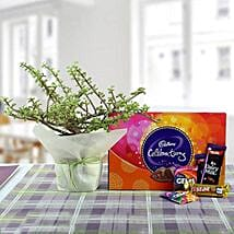 Delicious Chocolates N Jade Plant: Send Gift Hampers for Kids