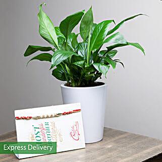 Designer Rakhi & Peace Lily Plant Combo: Rakhi With Greeting Cards