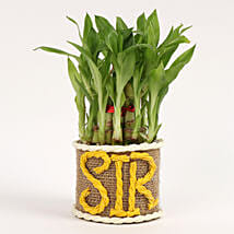 Elegant 2 Layer Lucky Bamboo Plant For Sir: Gifts for Teachers Day