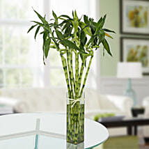 Eleven Spiral Bamboo Plant: Send Lucky Bamboo for Birthday