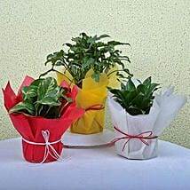 Enjoy Life House Plants:
