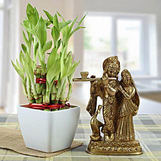 Eternal Bond: Plants to Lucknow