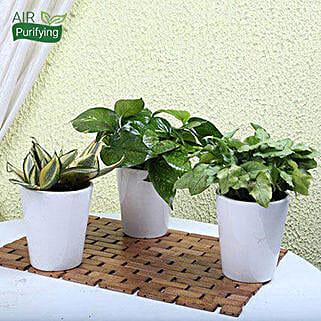 Exotic House Plants:
