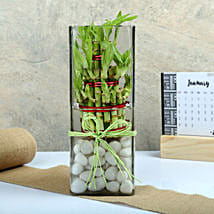 Exquisite Three Layer Bamboo Terrarium: Plants to Chennai