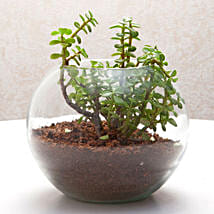 Fantastic Jade Terrarium: Send Plants to Delhi