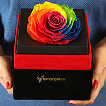 Big Forever Rainbow Rose in Black Velvet Box: Forever Roses