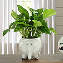 Freshen Up Money Plant: Mothers Day Gifts Aligarh