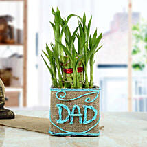 Good Luck Bamboo Plant for Dad: Fathers Day Gifts From Daughter
