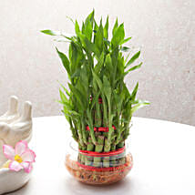 Good Luck Three Layer Bamboo Plant: Valentine Gifts Ambala