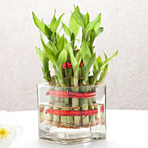 Good Luck Two Layer Bamboo Plant: Congratulations Gifts