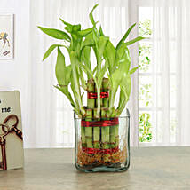 Good Luck Two Layer Bamboo Plant: Friendship Day Gifts