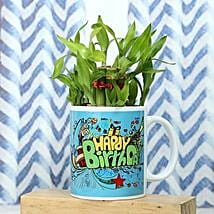 Healthy Celebration: Lucky Bamboo Plants
