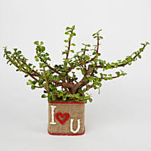 Jade Plant in a Glass Vase I Love You: Today Delivery of Plants