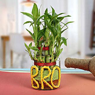 Lucky Bamboo For Brother: Send Spiritual Gifts for Bhai Dooj