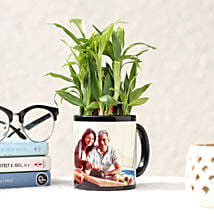 Lucky Bamboo in Personalised Black Mug: Bamboo Plants
