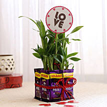 Lucky Bamboo with Love Tag & Dairy Milk Combo: Plants to Delhi