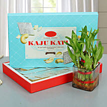 Lucky Wishes with Kaju Barfi: Lucky Bamboo for Diwali
