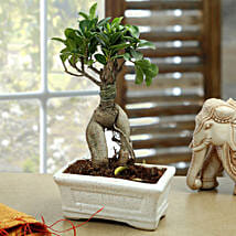 Marvellous Bonsai Plant: Send Home Decor to Delhi