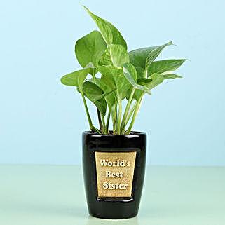Money Plant For Best Sister: Money Plant