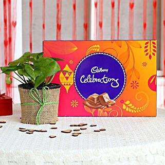 Money Plant in Black Pot with Cadbury Celebrations: Cadbury Chocolates