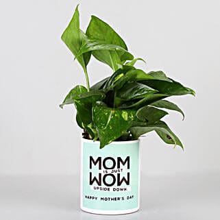 Money Plant In Mom Is Wow Pot: Buy Indoor Plants