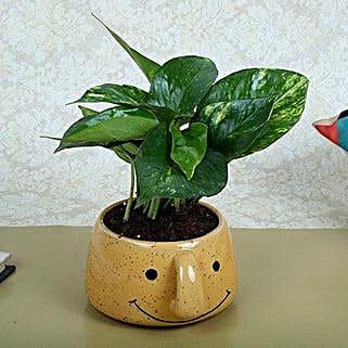 Money Plant In Smiley Vase: Spiritual and Vastu Plants