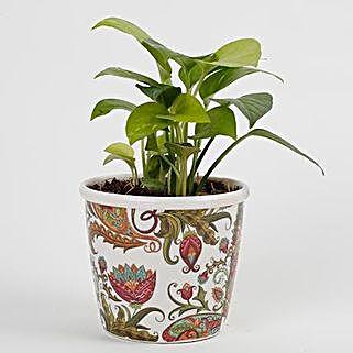 Money Plant in Stoneware Floral Pot: Money Plant
