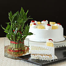 Pineapple Cake With Lucky Bamboo Plant: Plants for anniversary