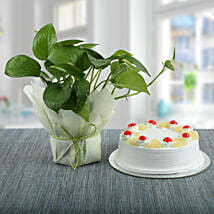 Pineapple Cake With Money Plant: Plants for birthday