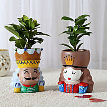 Set of 2 Ficus Compacta In King Queen Pots: Air Purifying Plants