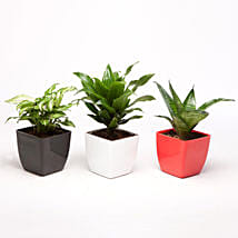 Set of 3 Green Plants in Plastic Pots: Air Purifying Plants