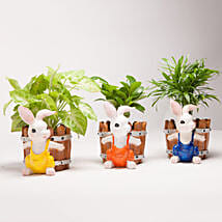 Set of 3 Green Plants in Resin Pots: Premium Plants